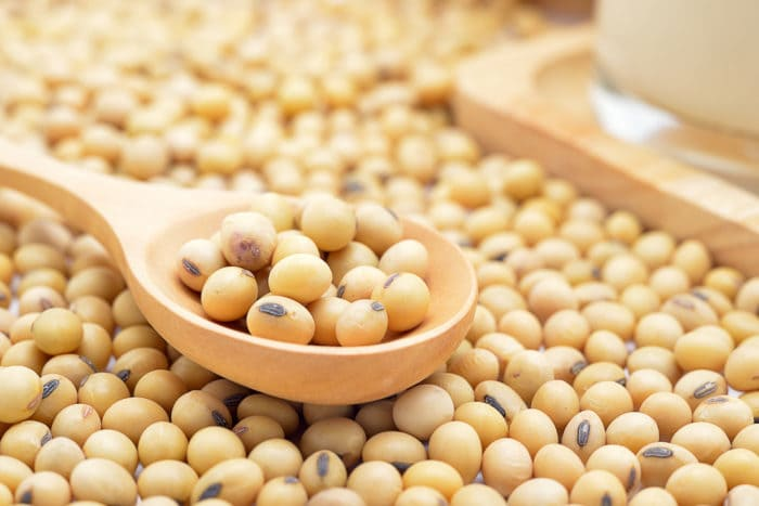 kacang kedelai mengobati kanker payudara