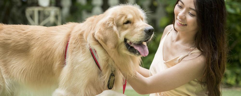 Siapa Sangka, Anjing Si Sahabat Paling Setia Ini Punya Isi Usus yang Mirip Dengan Manusia!