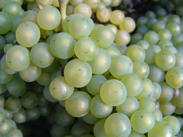 gejala penyebab ciri hamil anggur