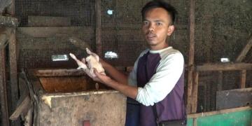 Harga Melambung, Pedagang Daging Ayam Merugi