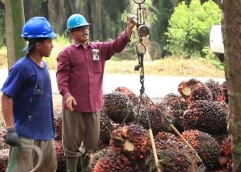 Dukung Mandatori Biodiesel, Pemerintah Revisi Perpres Penghimpunan dan Penggunaan Dana Kelapa Sawit