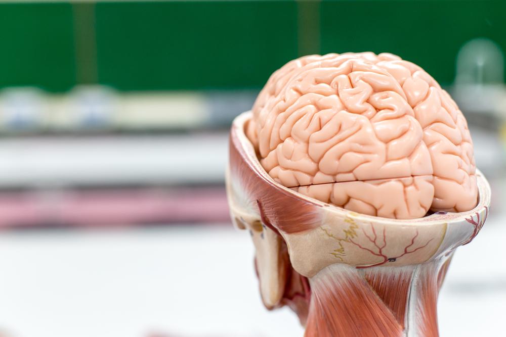 penyakit kuru, makan otak manusia