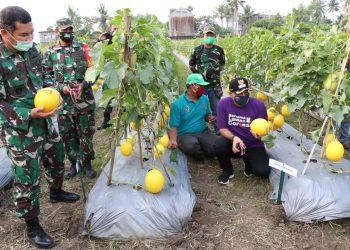 Panen melon di Teluknaga, Kabupaten Tangerang. (IST)