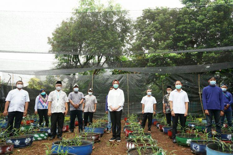 Walikota Tangsel Airin Rachmi Diany bersama petani jahe di Kelurahan Lengkong Karya, Serpong Utara. (PHD)